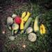 19-20 mars 2016 _ Les 48h de l'agriculture urbaine